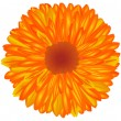 Stock Photo: Yellow-orange flower.