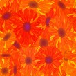 Royalty-Free Stock Photo: Seamless pattern yellow-orange flower.