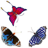 Abstract exotic butterfly. — Stock Photo