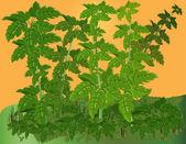 Vegetativní pozadí. — Stock fotografie