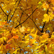 Close-up Golden Leaves — Stock Photo