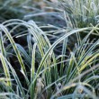 Closeup Frozen Grass — Stock Photo #7605977