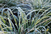 Närbild fruset gräs — Stockfoto