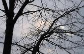 Silueta de árbol — Foto de Stock