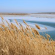 Dry Reeds in Winter — Stockfoto #7800861