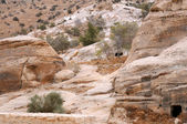Sparse Vegetation in the Mountains of Petra — Stock Photo