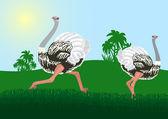Ostriches — Vector de stock