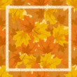 Stock Vector: Frame of autumn leaves