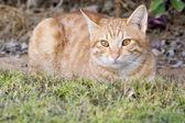De kat — Stockfoto