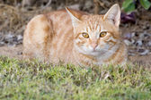 кошка — Стоковое фото