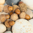 Acorns — Stock Photo #7642152