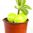 Stock Photo: Young plant with tennis balls