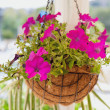 Stock Photo: Pink flower in vase