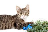 Kitten and Christmas — Stock Photo