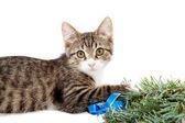 Kotě a vánoce — Stockfoto