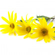 Stock Photo: Yellow flowers over white