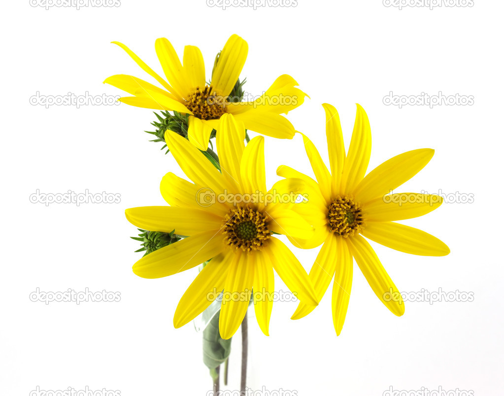 Yellow flowers over white — Stock Photo #7153546