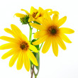 Yellow flowers over white — Stock Photo