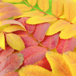 Abstract background with color autumn leaves — Stock Photo