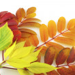 Stock Photo: Abstract background with color autumn leaves