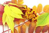 Abstract background with color autumn leaves and flower — Stock Photo