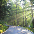 Stock Photo: Forest road in the early morning
