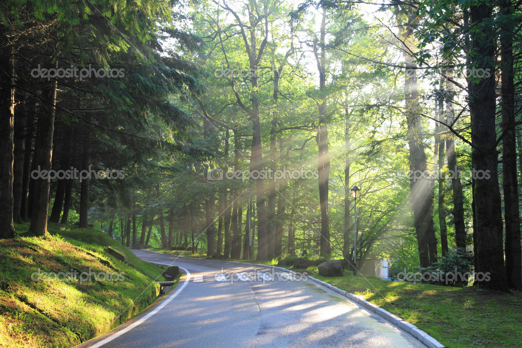 Early summer morning.forest road, on the right sunbeams making the way through foliage are visible — Stock Photo #7762267