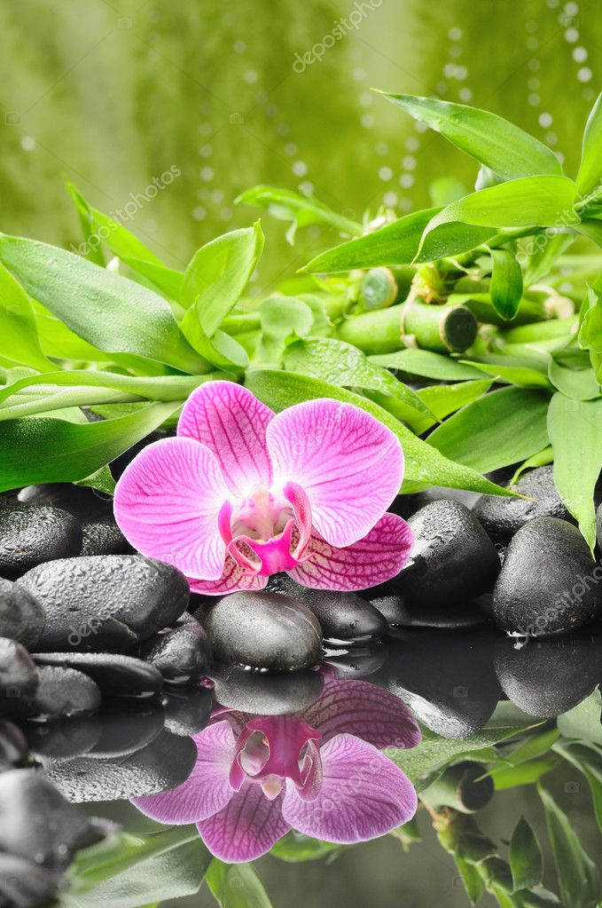Spa concept with zen stones and orchid — Stock Photo #6839287