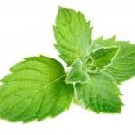 Small mint — Stock Photo