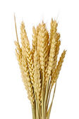The wheat — Foto Stock