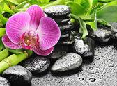 Roze orchid — Stockfoto