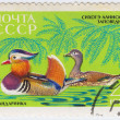 USSR show tangerine bird — Stock Photo #7214798