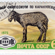 Stock Photo: USSR shows Karakul Lamb