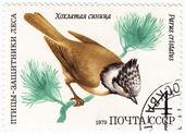 山雀大山 cristatus — 图库照片
