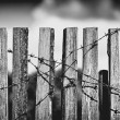 Fence With Barbed Wire — Stock Photo