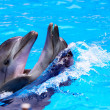 Couple of dolphin in blue water. — Stock Photo #7110814