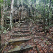 Steps conducting in green jungle. — 图库照片 #7258035