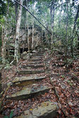 Steps conducting in green jungle. — 图库照片