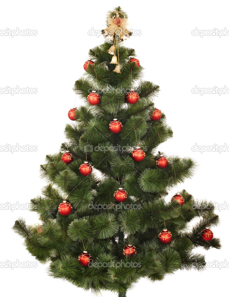 Christmas tree. Isolated.  Stock Photo #7559781