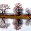 Tree reflection — Stock Photo