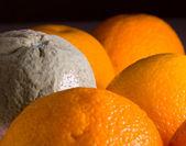 Macro image of orange with mold — Stock Photo