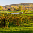 Vineyard row leads to fall trees — Stock Photo