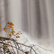 图库照片: Fall leaves by waterfall