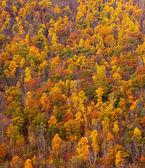 Kleurrijke fall gebladerte op heuvel — Stockfoto
