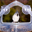 Tufted Titmouse on feeder — Stock Photo