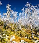 白霜 — 图库照片