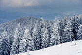 Winter in mountains — Stock Photo
