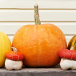 Harvested pumpkins outdoors — Stock Photo