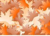 多彩的枫叶的背景 — 图库照片