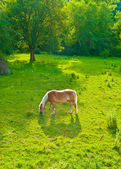 лошади выпаса на лугах на склонах альп — Стоковое фото